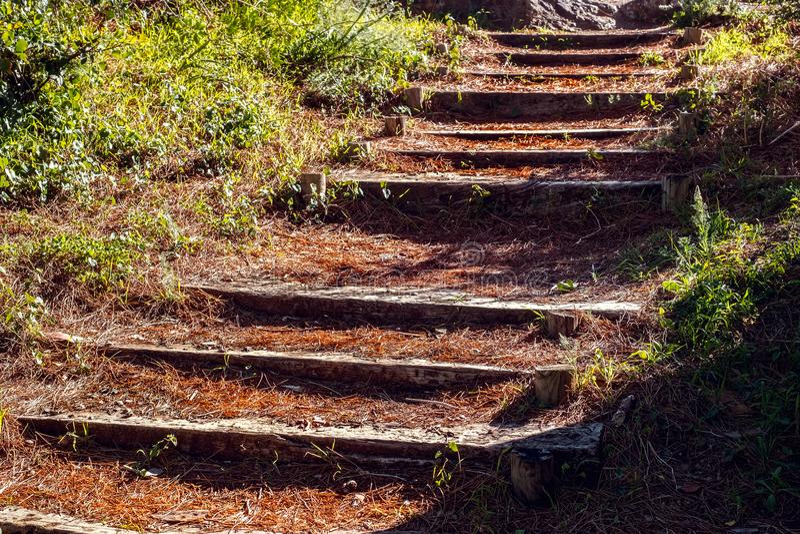 Oude houten treden door het bos stock foto's