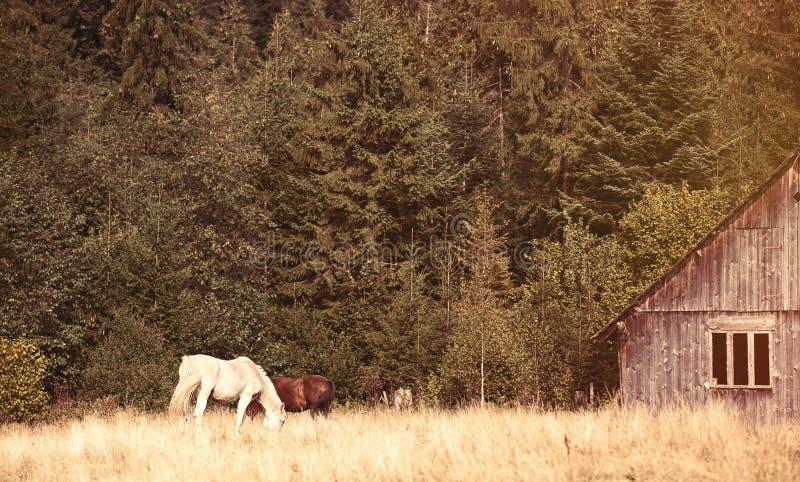 Oude huis en paarden royalty-vrije stock afbeelding