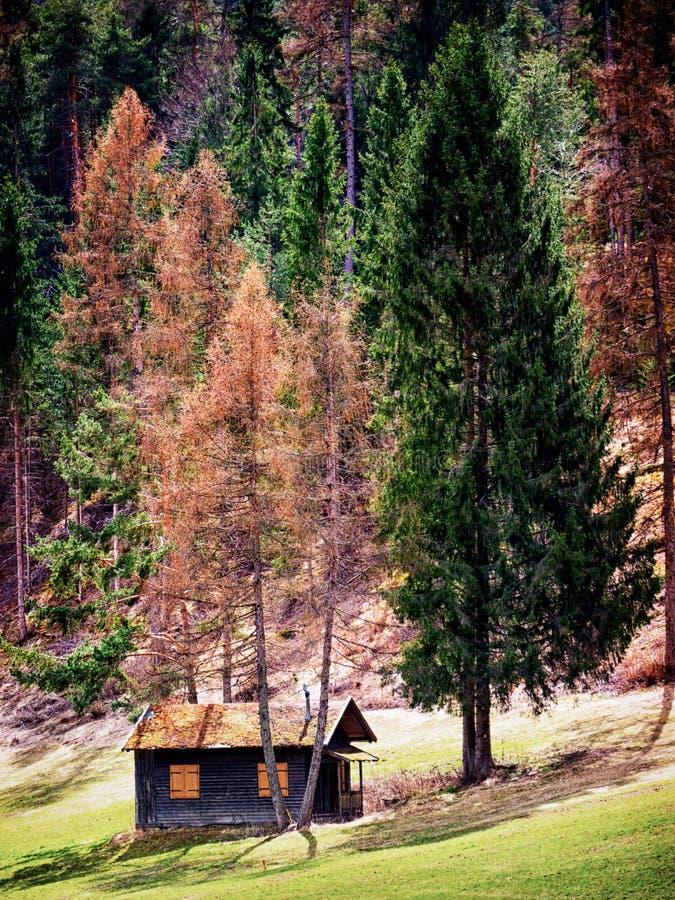 Oude hut stock foto