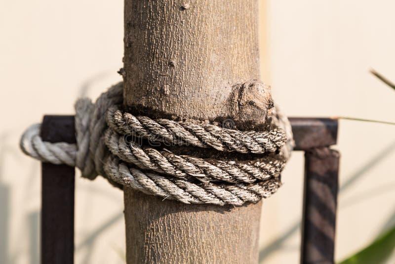 Oude kabel op boom royalty-vrije stock foto's