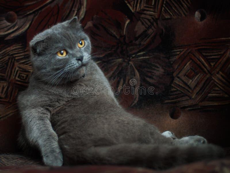 Oude kat stock afbeeldingen