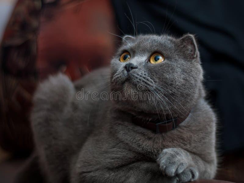 Oude kat stock afbeelding