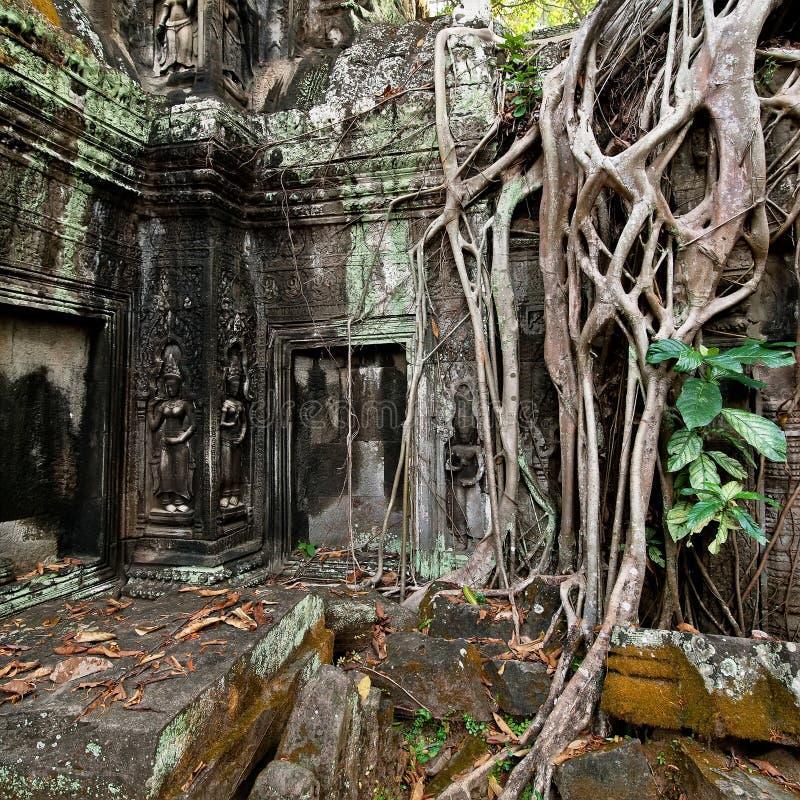 Oude Khmer architectuur De tempel van Ta Prohm in Angkor, Siem oogst, Kambodja stock afbeeldingen