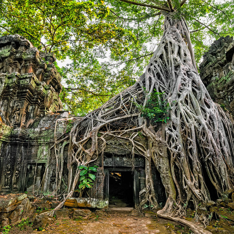 Oude Khmer architectuur De tempel van Ta Prohm met reuze banyan RT royalty-vrije stock foto's