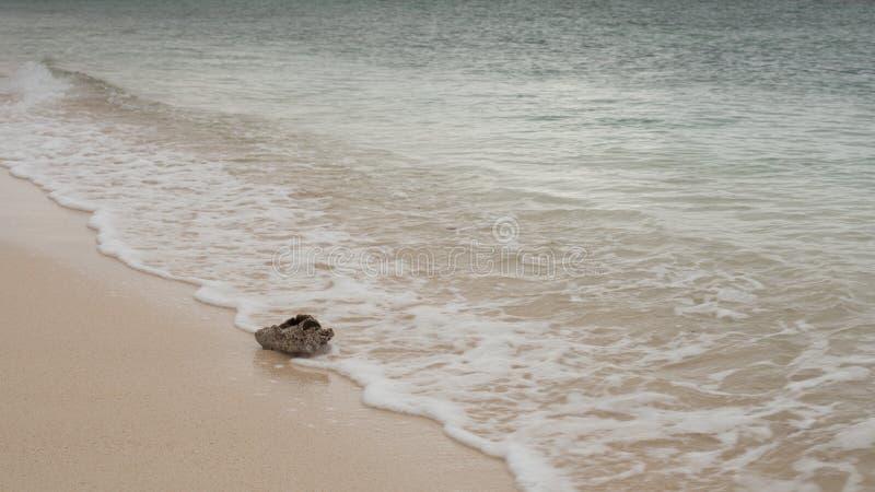 Oude kuiltjes gemaakte in kroonslakshell wordt gewassen omhoog op het witte zandstrand van een Caraïbische kust stock afbeelding