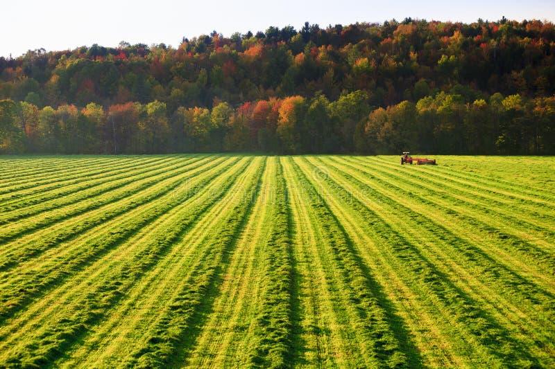 Oude landbouwbedrijftractor op een gebied. stock foto