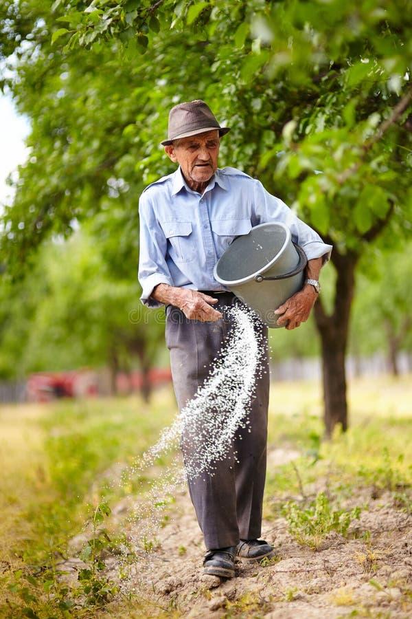 Oude landbouwer het uitspreiden meststof in boomgaard stock afbeeldingen