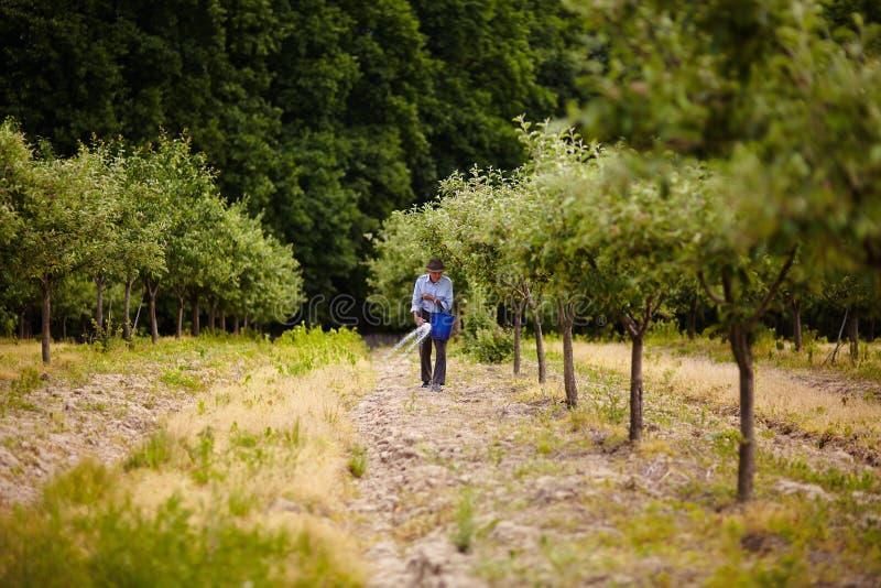 Oude landbouwer het uitspreiden meststof in boomgaard royalty-vrije stock foto's