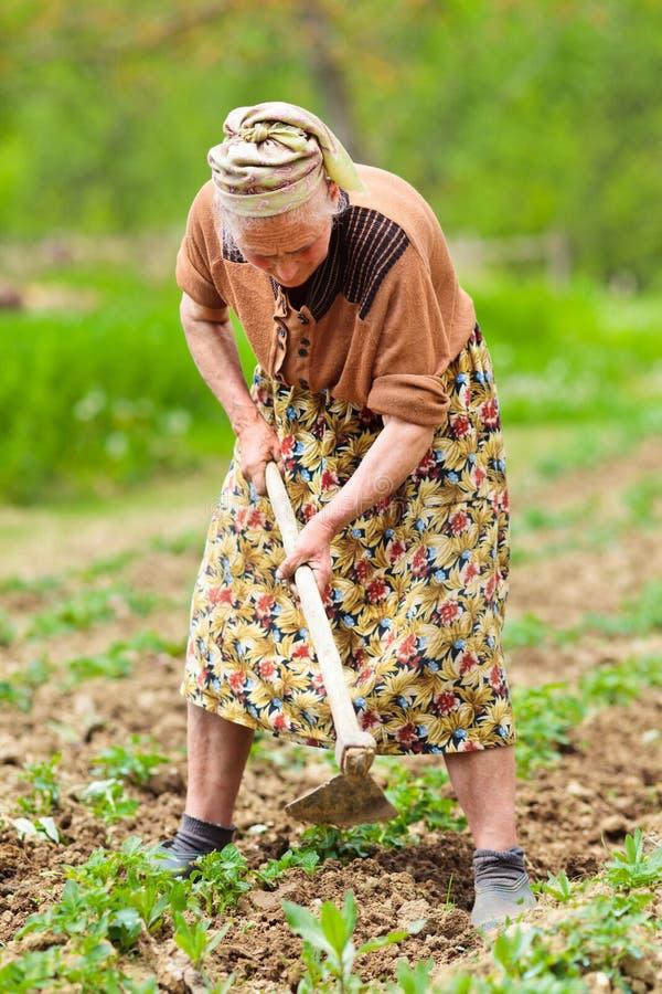 Oude landelijke vrouw die het land werkt royalty-vrije stock afbeelding