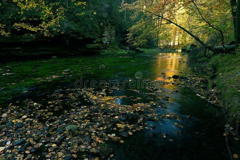 Oude magische forst met gevallen oranje bladeren in rivier Mystiek de herfstbos stock afbeelding