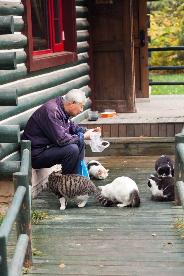 Oude mens die de verdwaalde katten in het park voedt stock foto