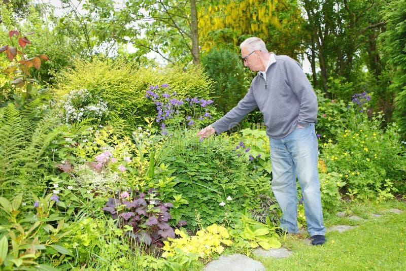 Oude mens die in zijn tuin tuinieren stock afbeelding