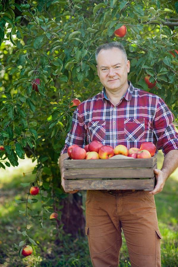 Oude mens met Apple in de Apple-Boomgaard stock fotografie