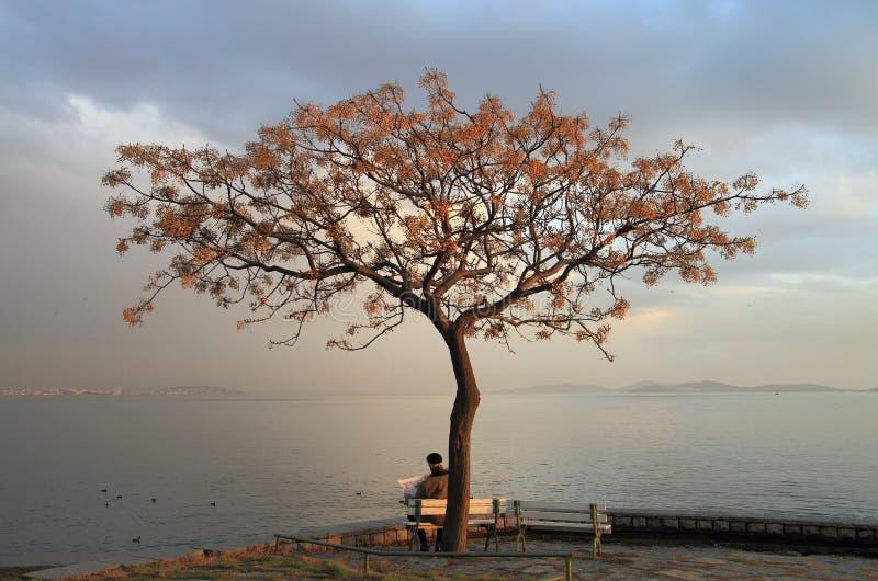 Oude mens onder boom stock afbeeldingen