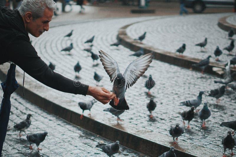 Oude mensen en duiven stock afbeelding