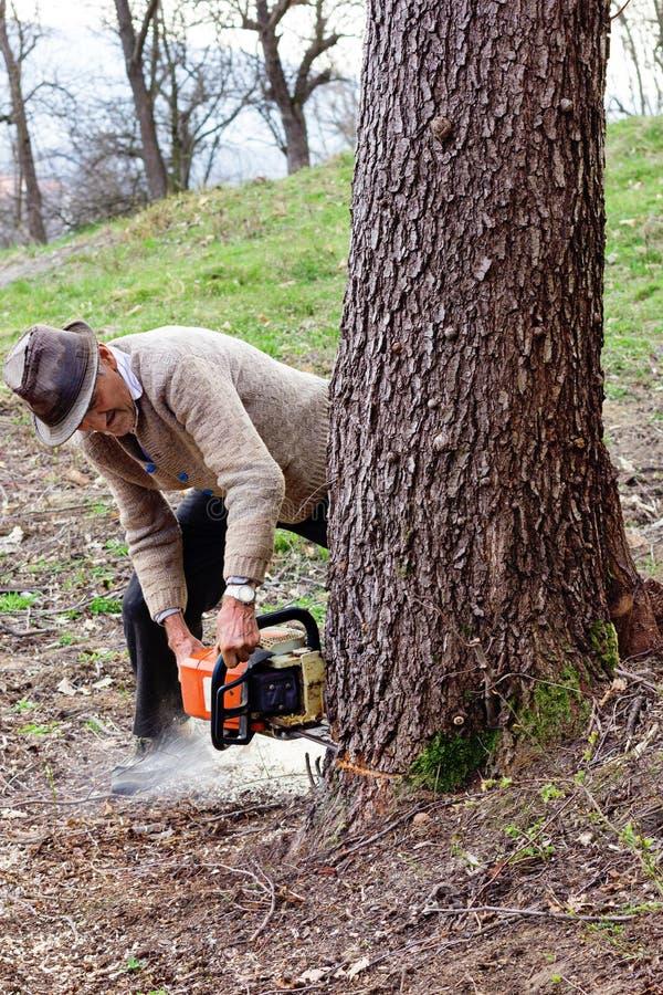 Oude mensen scherpe bomen die een elektrokettingzaag met behulp van stock afbeeldingen