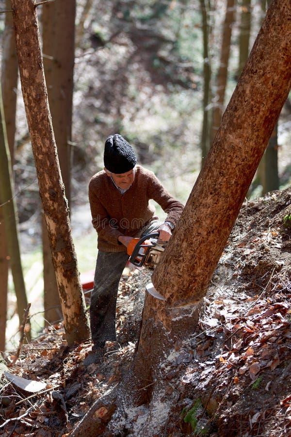 Oude mensen scherpe bomen die een kettingzaag met behulp van stock foto's