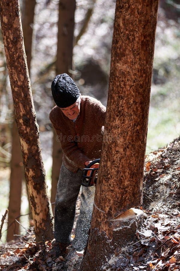 Oude mensen scherpe bomen die een kettingzaag met behulp van stock afbeeldingen