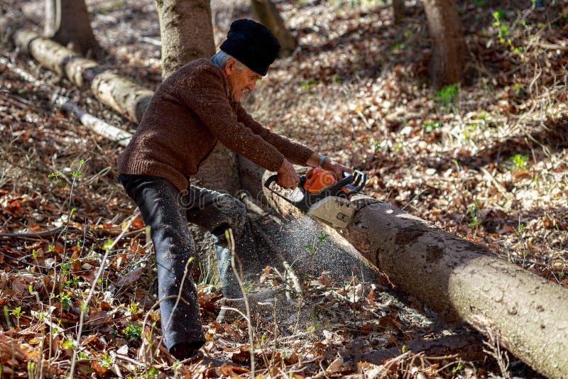 Oude mensen scherpe bomen die een kettingzaag met behulp van stock afbeelding