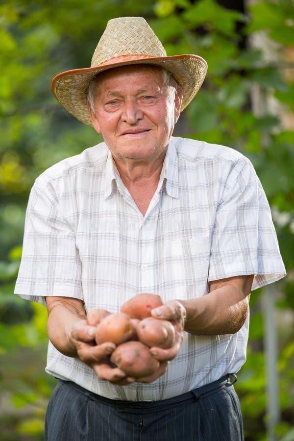 Oude mensenhand met verse geoogste aardappels op groene achtergrond royalty-vrije stock foto