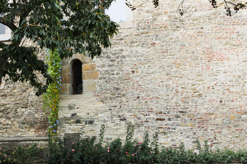 Oude muur in het kasteel van Praag met boom stock foto