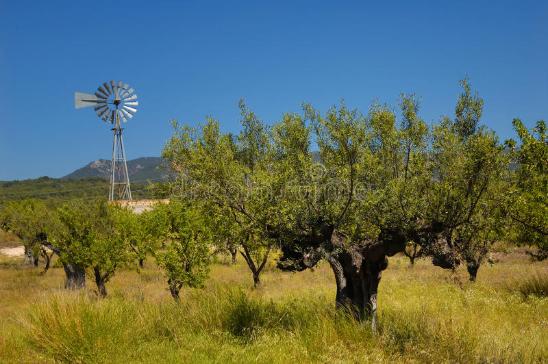 Oude olijfboom en windmolen royalty-vrije stock foto