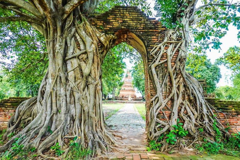 Oude poort met banyan die wortel 'Gateway aan de passage van tijd 'bij ruïnes van Wat Phra Ngam, Phra Nakorn Si Ayutthaya wordt g stock fotografie