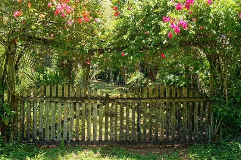 Oude poort van tropische tuin met bougainvillea royalty-vrije stock foto