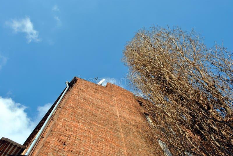 Oude populierboom zonder bladeren, rode baksteen de bouwmuur op achtergrond van de de winter de heldere blauwe hemel, mening van  royalty-vrije stock afbeelding
