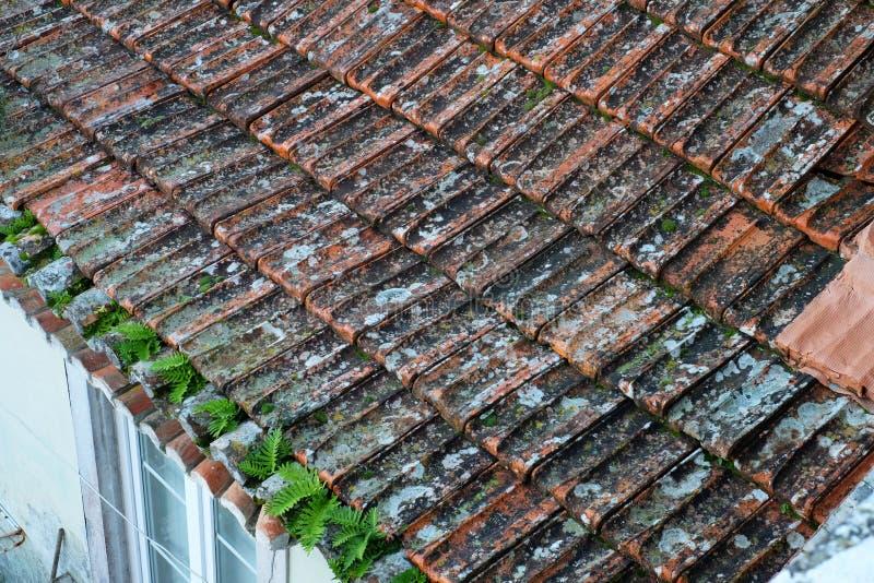Oude rode keramische tegel op het dak met ontkiemende installaties en met behoefte aan reparatie stock afbeeldingen