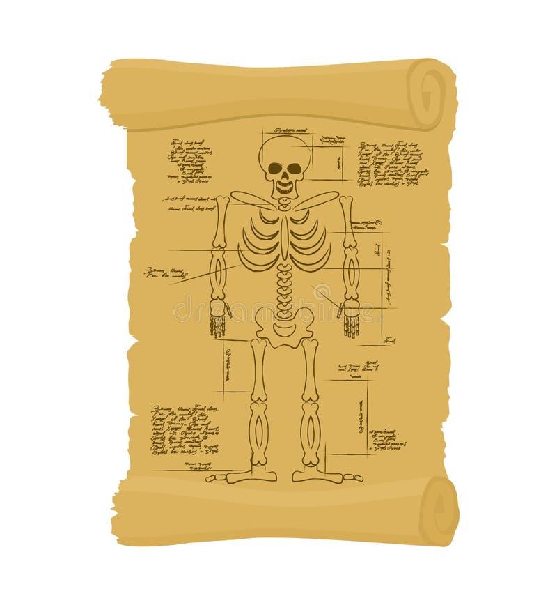 Oude rol van skelet Archaïsch papyrus van anatomische Struct royalty-vrije illustratie