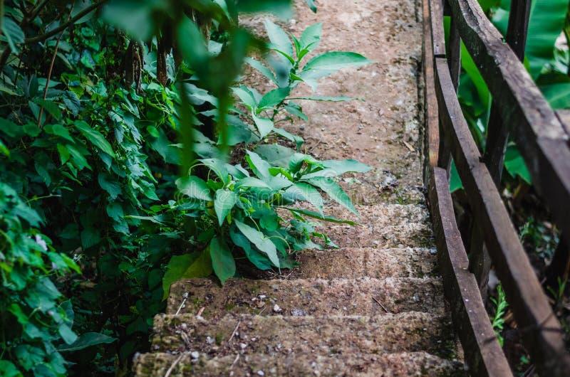Oude Rotsachtige stappen - onderaan een bos stock fotografie