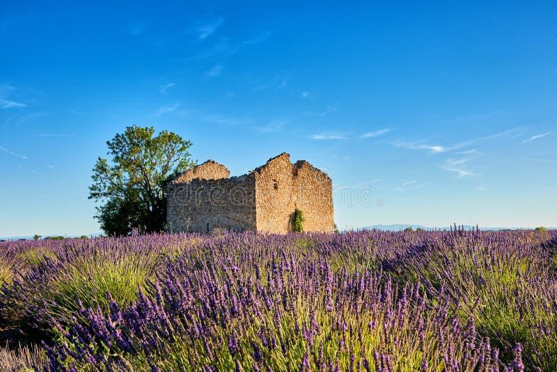 Oude ruïne in het midden van de lavendel royalty-vrije stock afbeeldingen