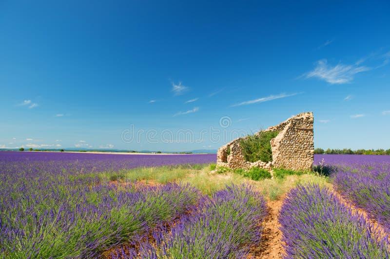 Oude ruïne op Lavendelgebieden royalty-vrije stock foto's