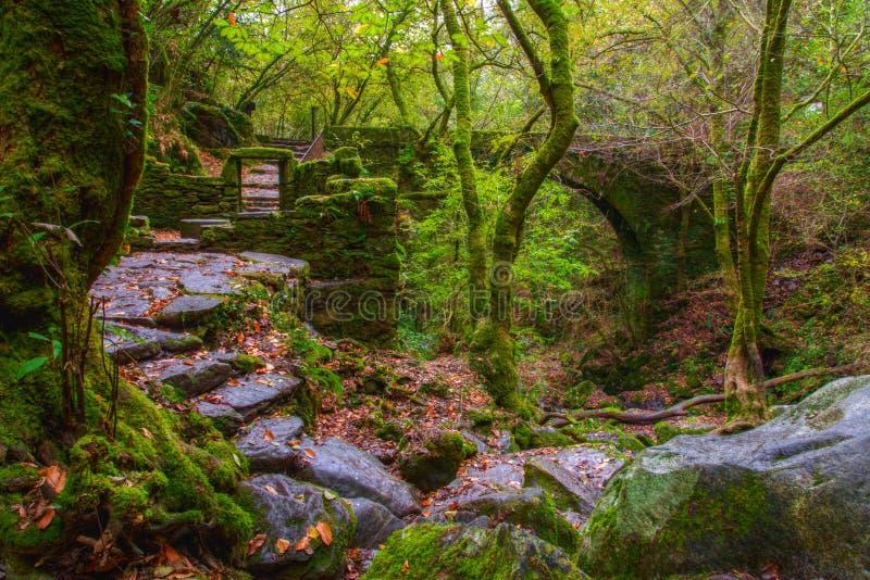 Oude ruïnes in een bos stock afbeeldingen