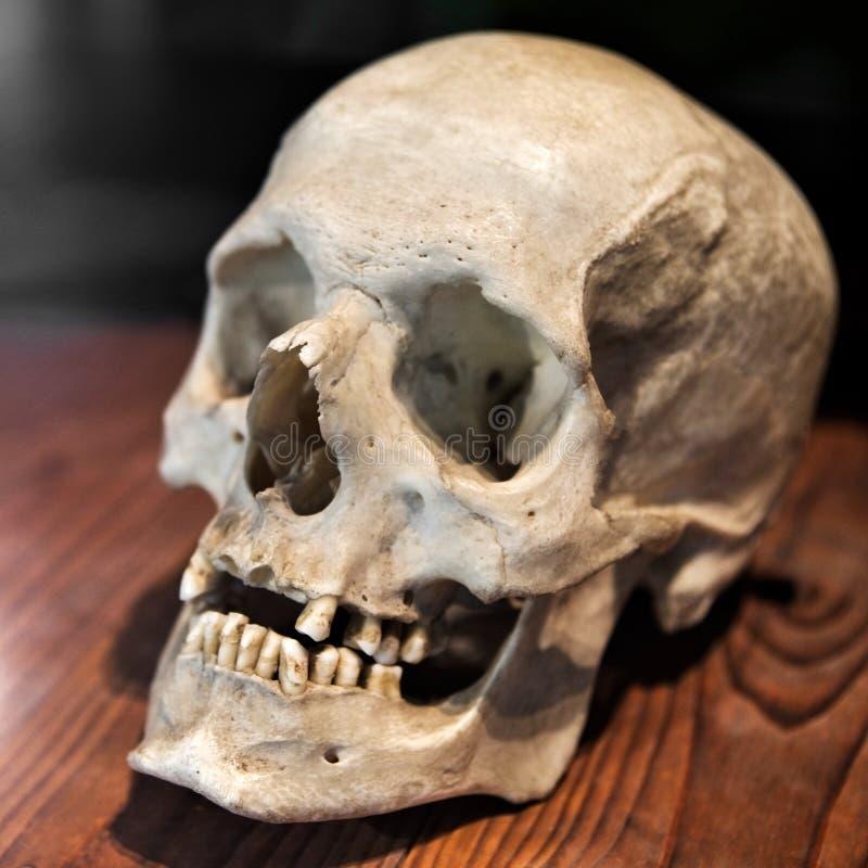 Oude schedel royalty-vrije stock afbeeldingen