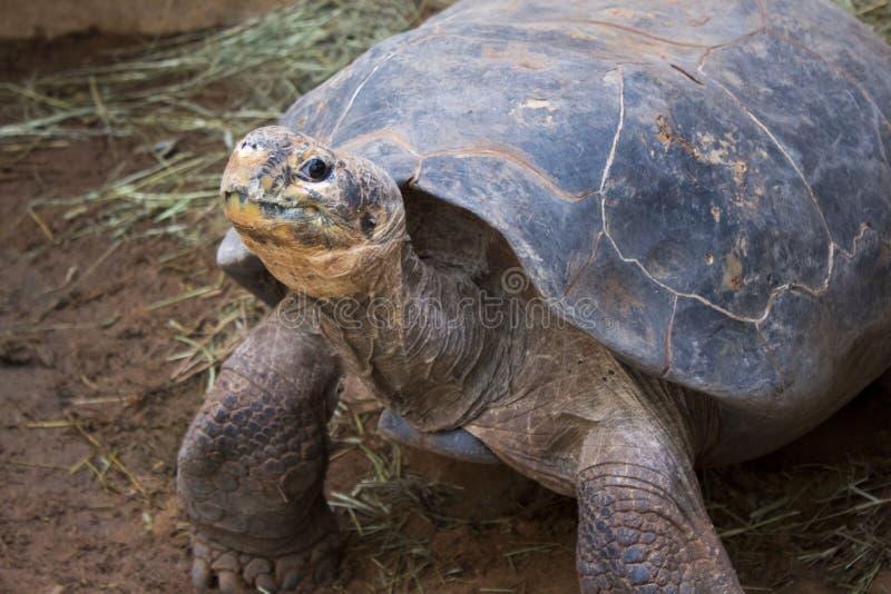 Oude Schildpad bij Dierentuin royalty-vrije stock afbeelding