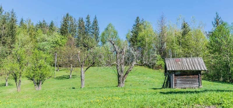 Oude schuur en oude bomen in de tuin royalty-vrije stock fotografie