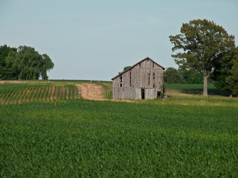 Oude schuur op een landbouwbedrijf stock fotografie
