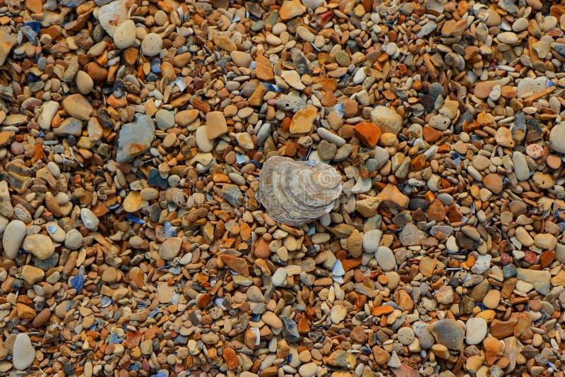 Oude shell die op a leggen pebbled strand stock afbeelding