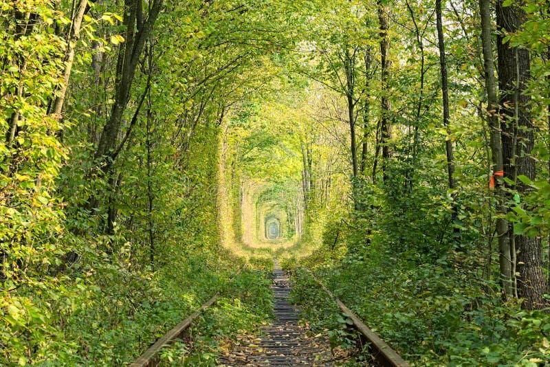Oude spoorlijn De aard met behulp van bomen heeft tot een unieke tunnel geleid Tunnel van liefde - prachtige van nature gecreeerd royalty-vrije stock afbeeldingen