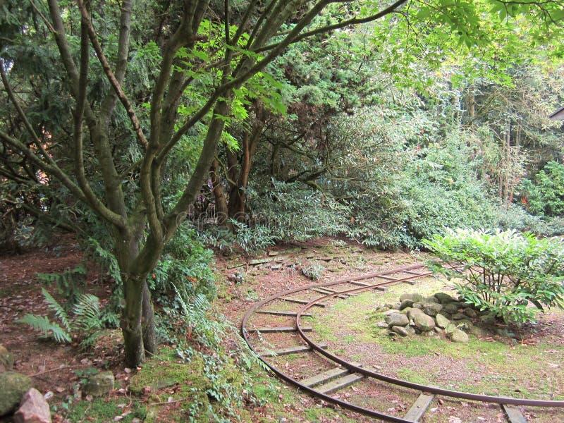 Oude sporen in het bos royalty-vrije stock fotografie