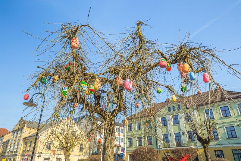 Oude stadscentrum en eierenboom in Letland stock foto's