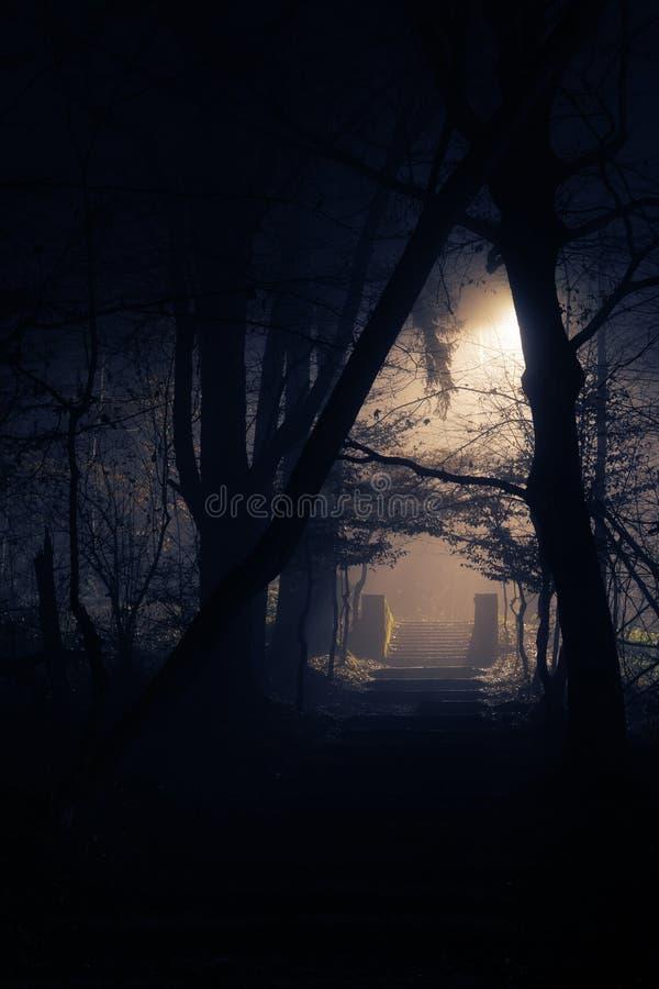 Oude steenachtige treden in dichte mist bij nacht in bos stock foto