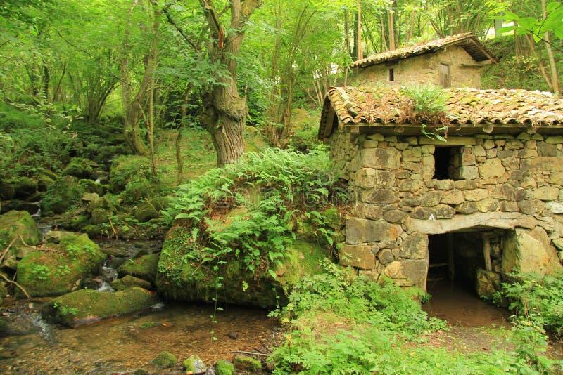 Oude steenmolen op een rivier in een groen en weelderig bos stock afbeelding