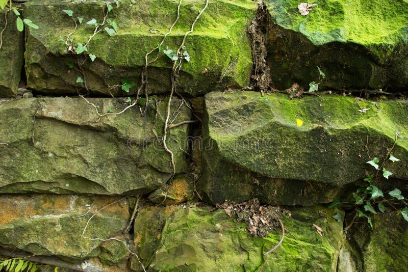 Oude steenmuur en groene klimop stock foto's