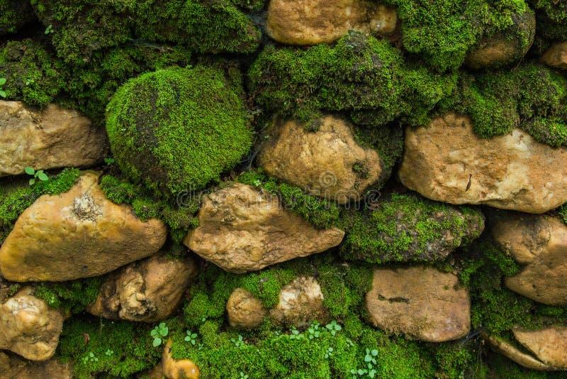 Oude steenmuur met mos royalty-vrije stock afbeelding