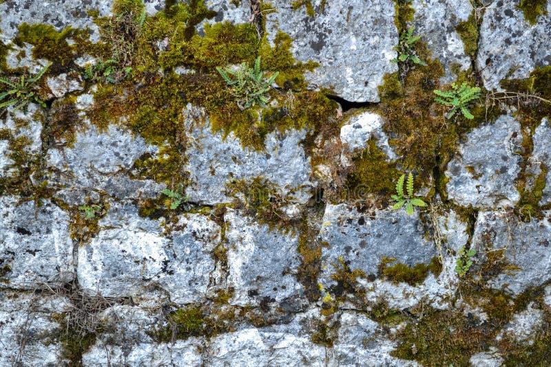 Oude steenmuur met mos en korstmos stock foto's