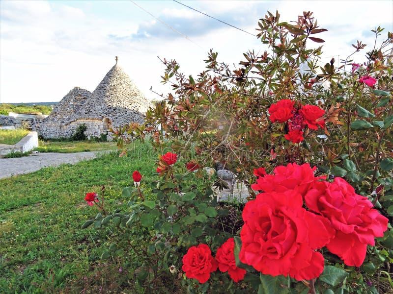 Oude Trulli, traditionele zeer oude huizen met rode rozen en andere aromatische planten royalty-vrije stock afbeeldingen