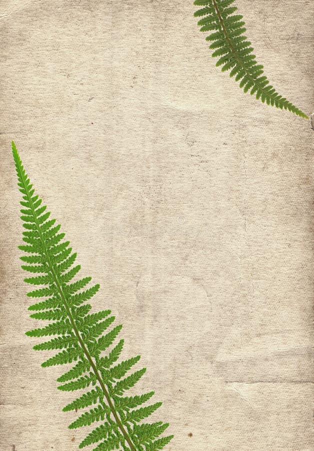 Oude uitstekende document textuur met droge varenbladeren royalty-vrije stock foto